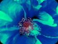 G0270_bloominuproar