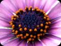 G0283_blueberrypie