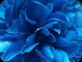 G0285_bluedreams