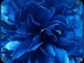 G0294_blueness