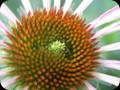 G0382_daisydesigns