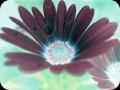 G0384_daisyinverse