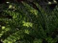 G0540_greenery
