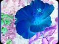 G0560_hibiscusinverted