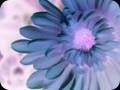 G0611_lavender blue