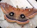G0675_moth