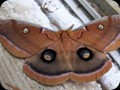 G0676_moth1