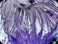 G0827_purplefronds