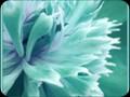 G0874_sea_green_framed