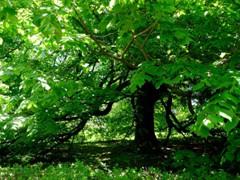 2011 Montecello Green