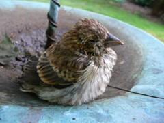 2013 Bird Saved