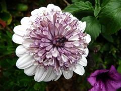 2013 Blooming Bloom