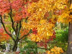 2013 Fall Foliage