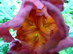 2013 Inner Iris